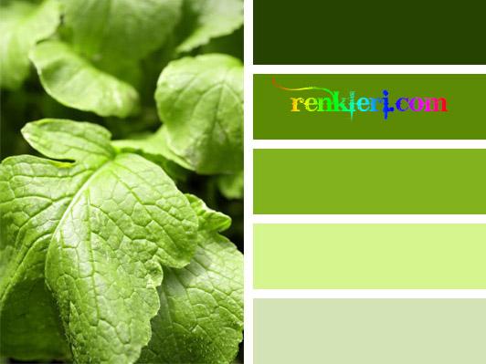Renkler renk kodları, renk paletleri ve web renkleri
