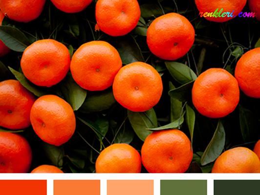 Turuncu rengin hakim olduğu bu renk paletindee tamamlayıcı renk olarak zeytinyeşilini görüyoruz